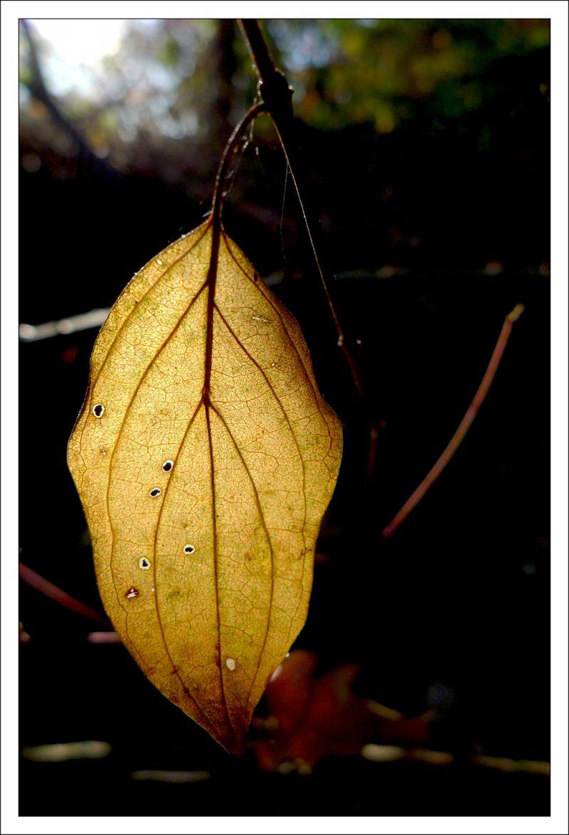 fulla leaf llum light