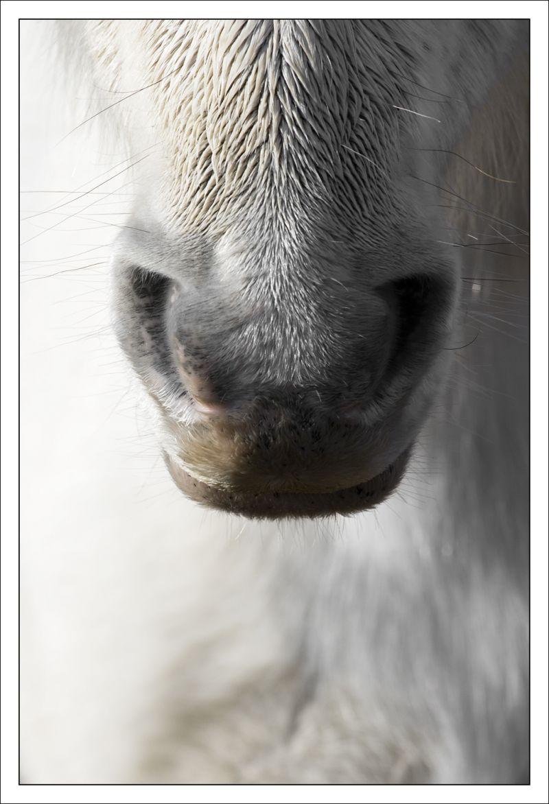 horse cavall