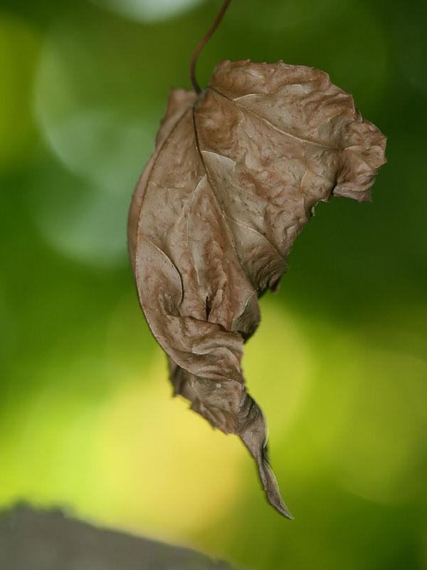 leaf de tardor