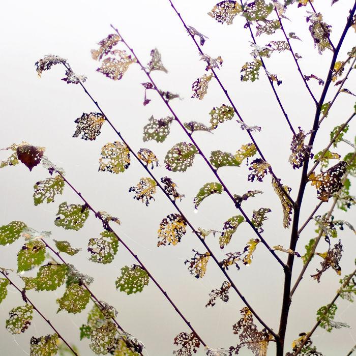 leaf fulla hoja