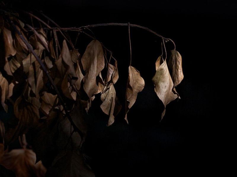 leaf Girona