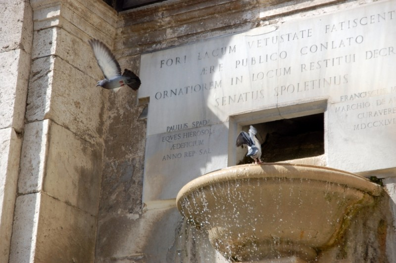 pigeons fountain