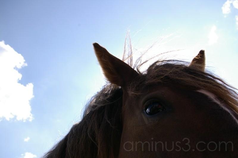 Ojo equino