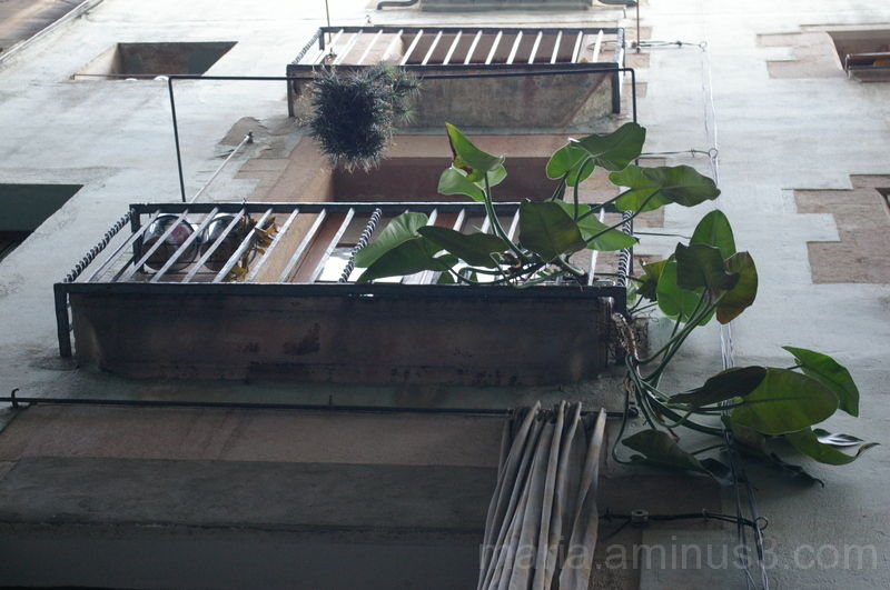 Vida en el balcón...