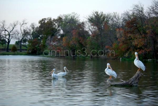 White Rock Lake, Dallas, TX