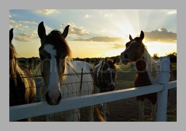 Craig Ranch Horses