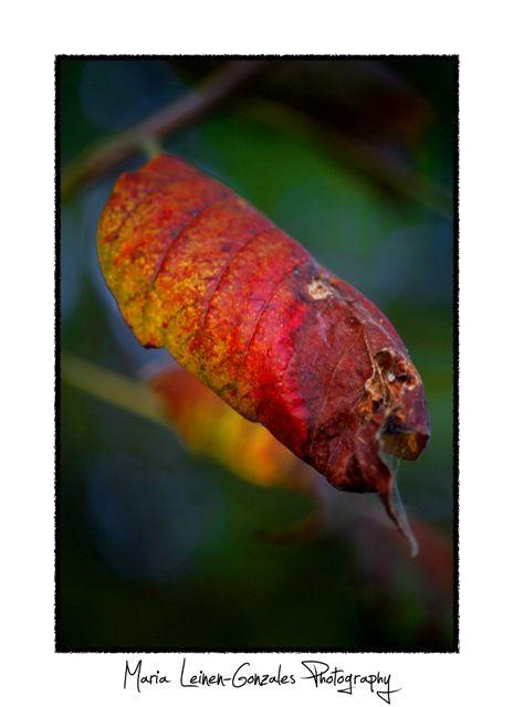 Wylie TX, Fall Foliage