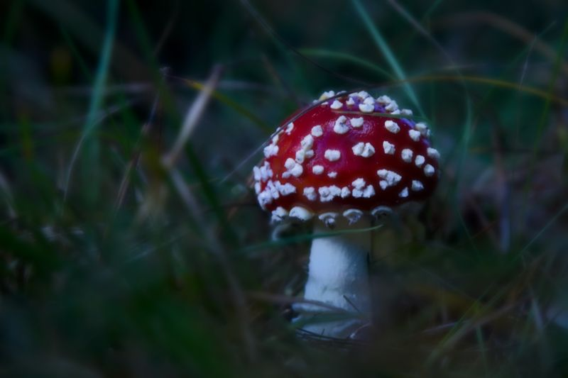 Poisenous mushroom