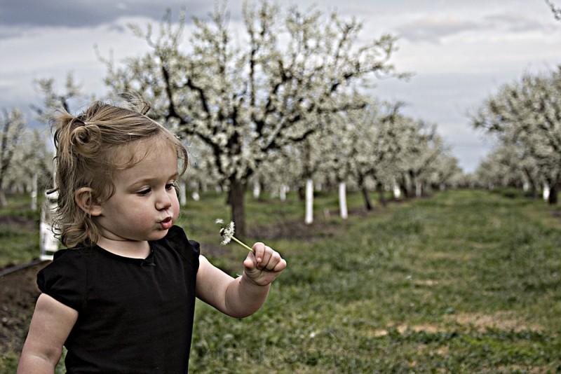Ava's Orchard