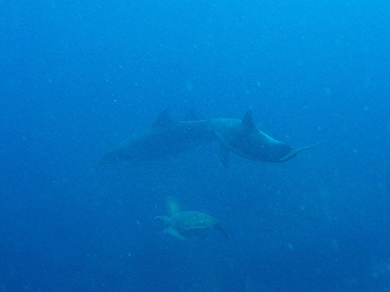 dolphin & sea turtle