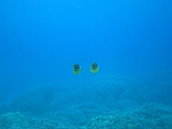 floating fish
