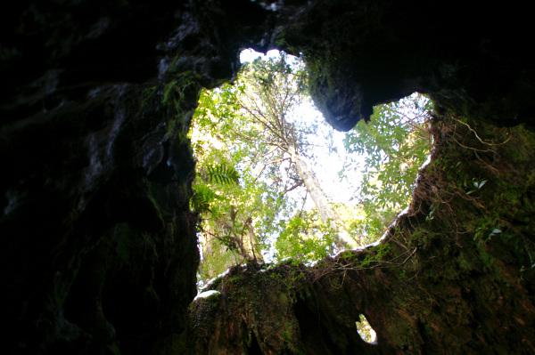 Heart shape stump in Yakushima, Japan