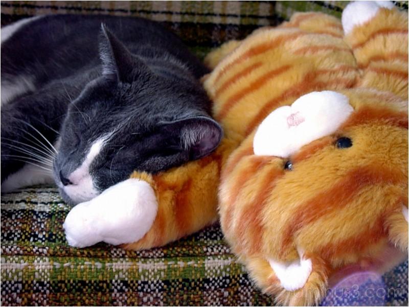 Mercia sleeping on a soft toy