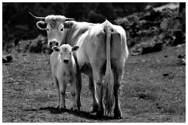 Madre e (hija o hijo)