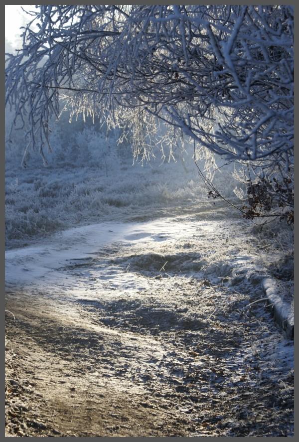 Winter at Het Leesten