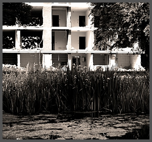 urban decay or urban development