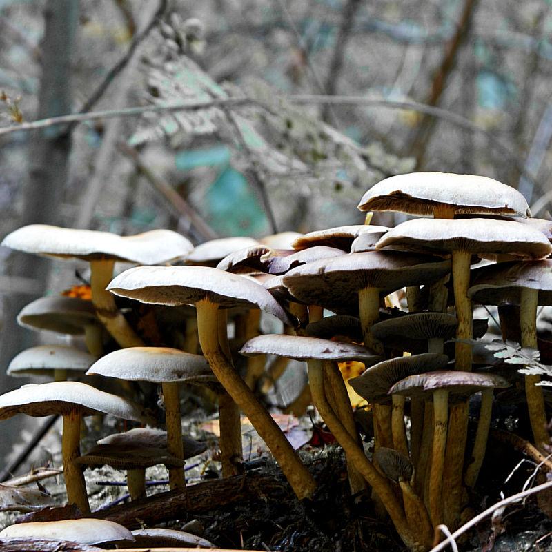 mushroom grouping