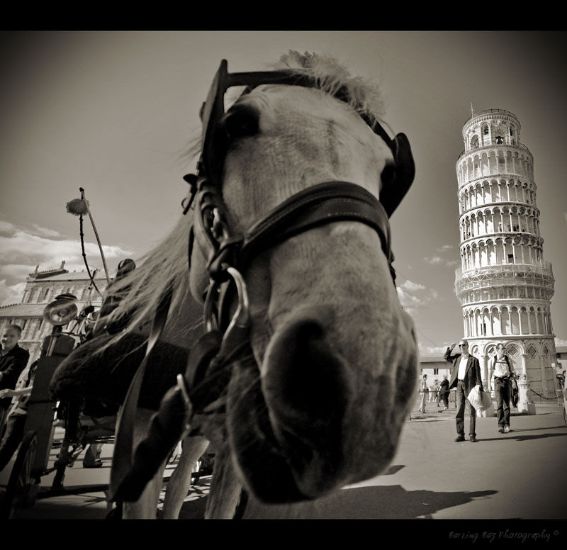 The Leaning Horse of Pisa