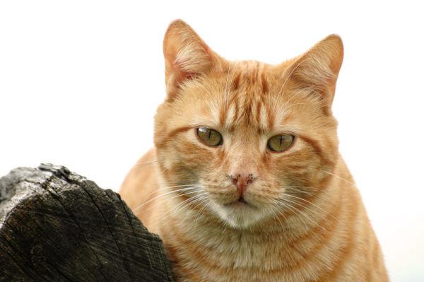 Caramel is watching you.