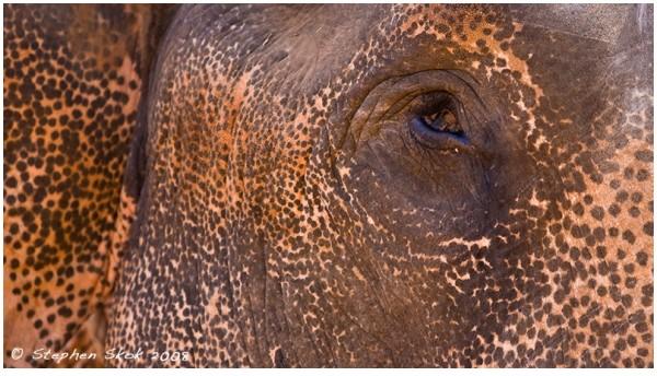 Spice Elephant