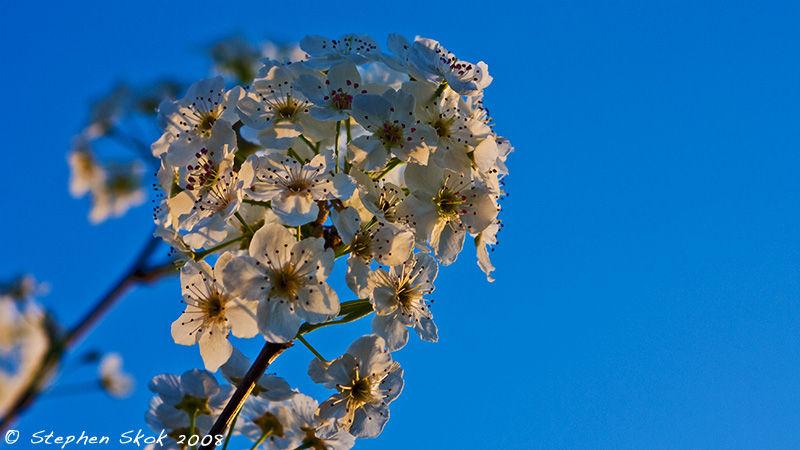 Afternoon Blossom Melbourne Australia flora