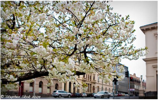 Ballarat spring cold