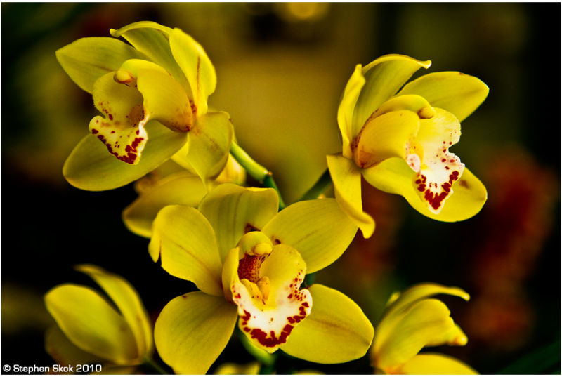 orchids StKilda photowalk