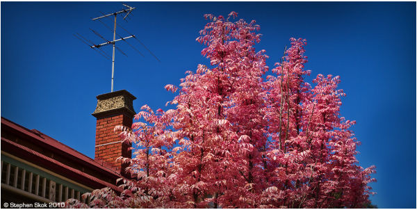 spring flora australia