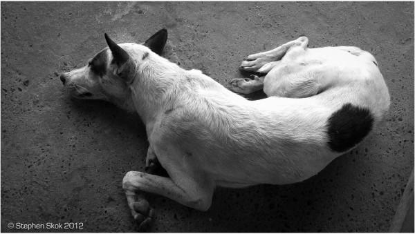 Laos, Luang Prabang, dogs, street