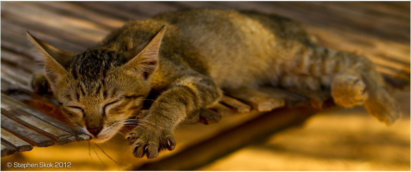 Laos, Luang Prabang, cat ,sleeping, peace