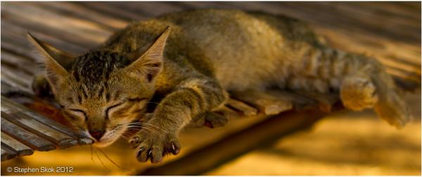 Laos, Luang Prabang, cat ,sleeping, peace