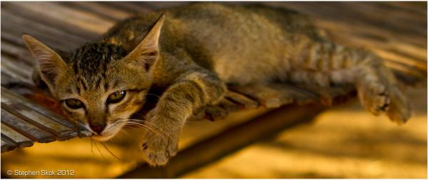 Laos, Luang Prabang, cat, sleeping, peace
