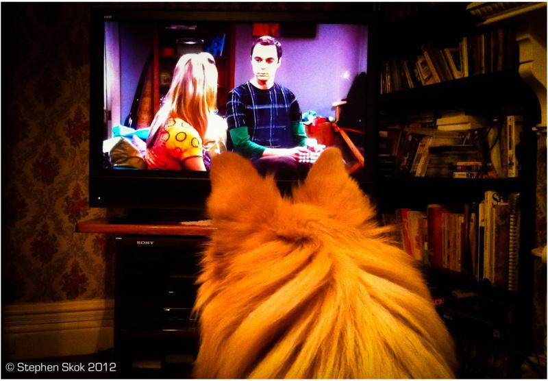 iPhone, YoYo,Pomeranian, TV, fun, Australia