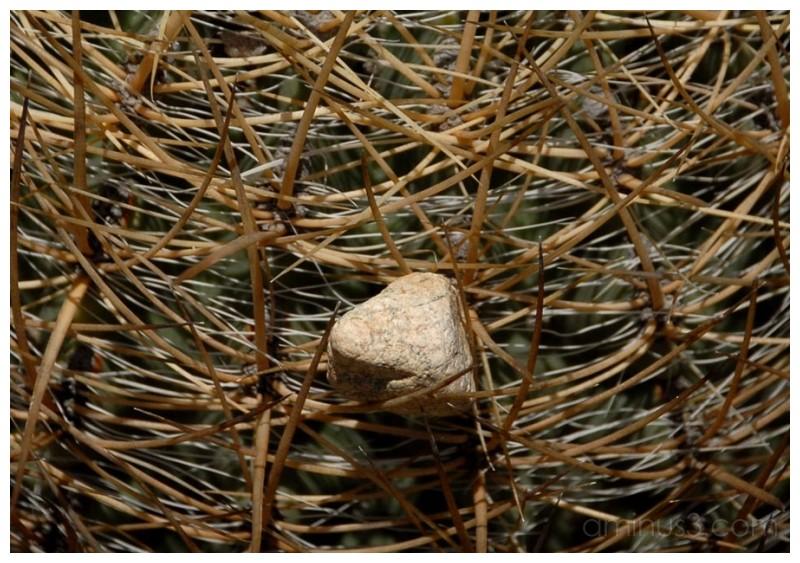 Stoned Cactus
