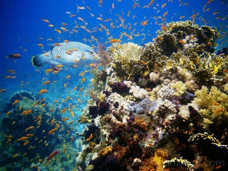 Underwater Mini