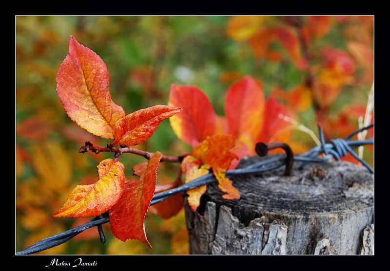 The color of fall
