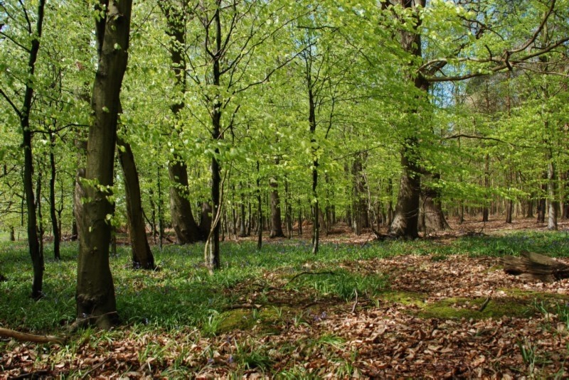 greatwood1
