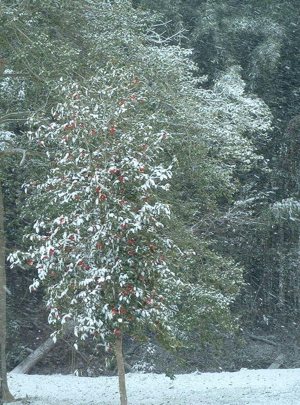 Snow day 3.2.2009