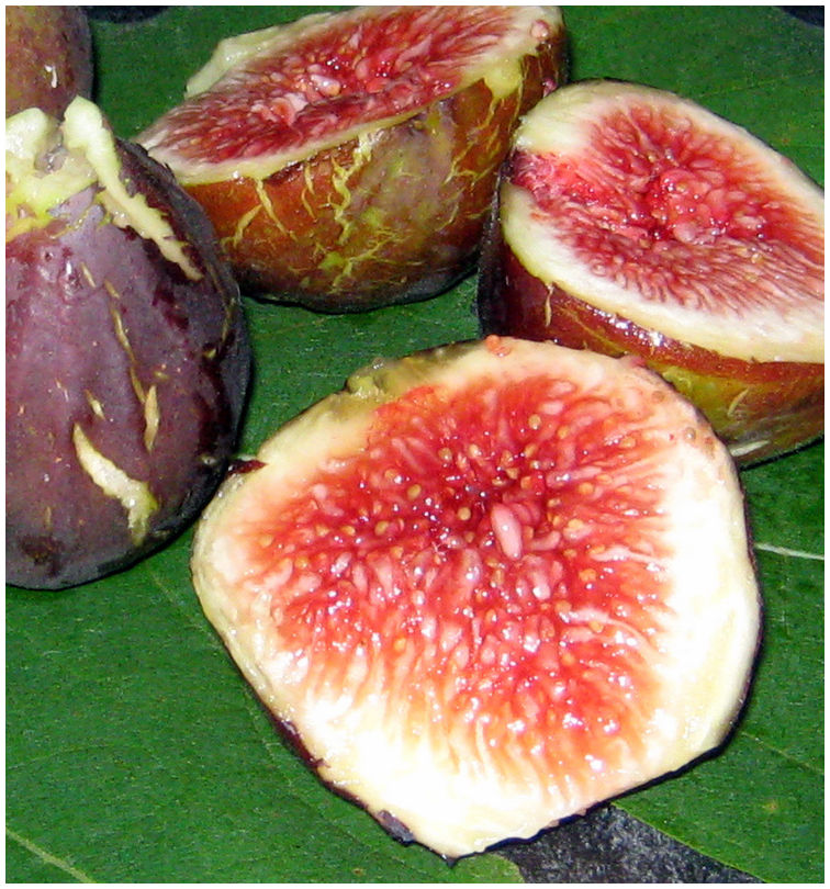 Freshly picked figs