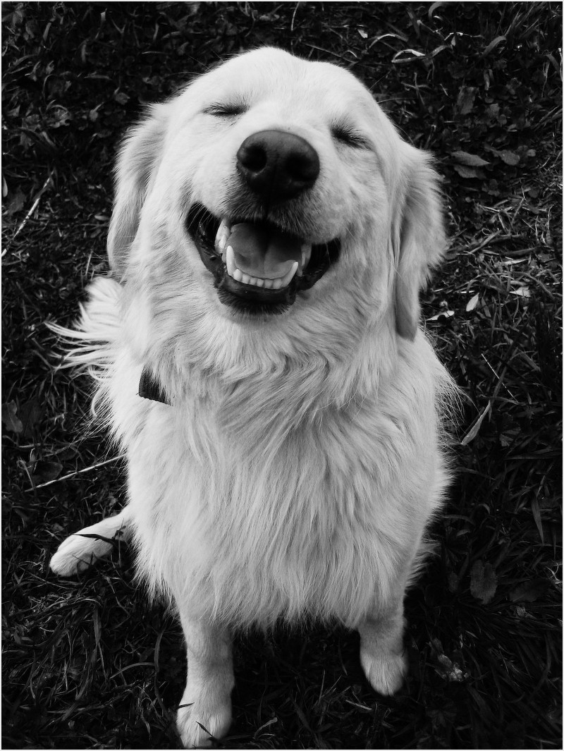 A smiling dog?