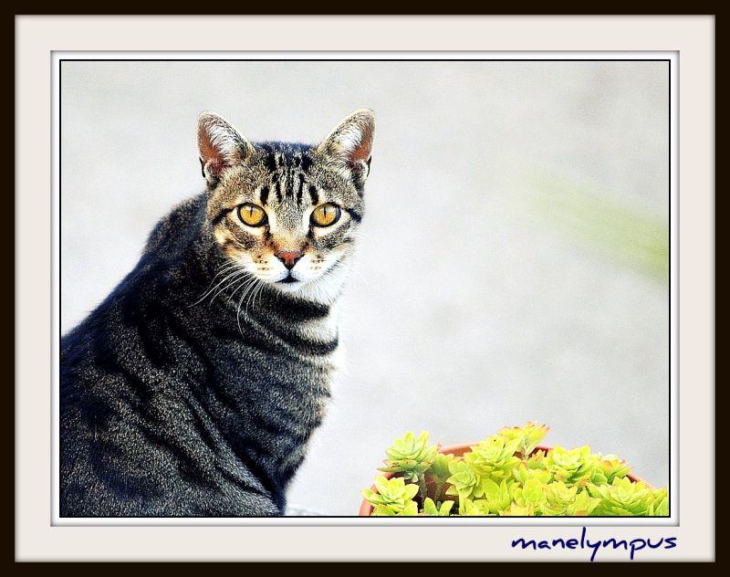 cat & plant