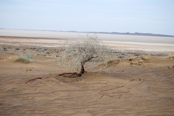 Lone Tree in Desert