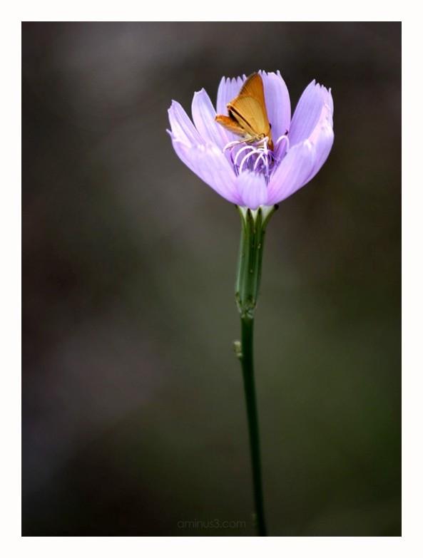moth on purple flower