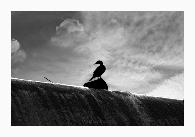 bird over waterfalls