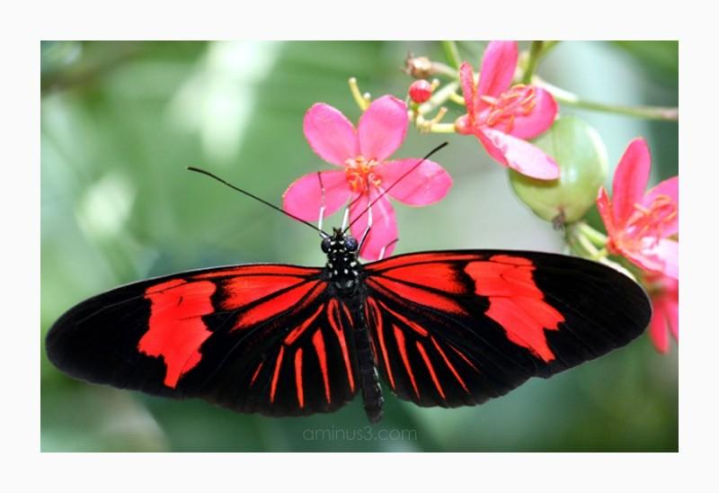 orange butterfly pink flower