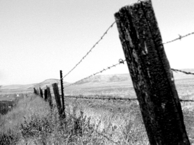 pastuire fence, b&w