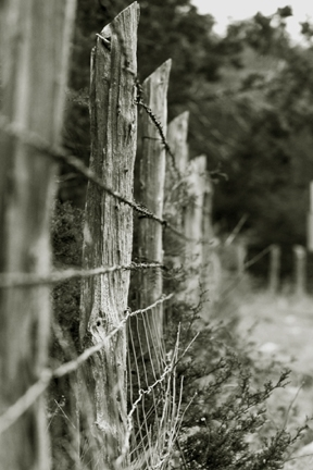 fence, country, wire fence,