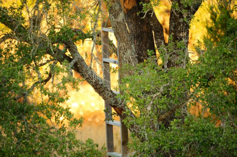 Sunset ladder in tree