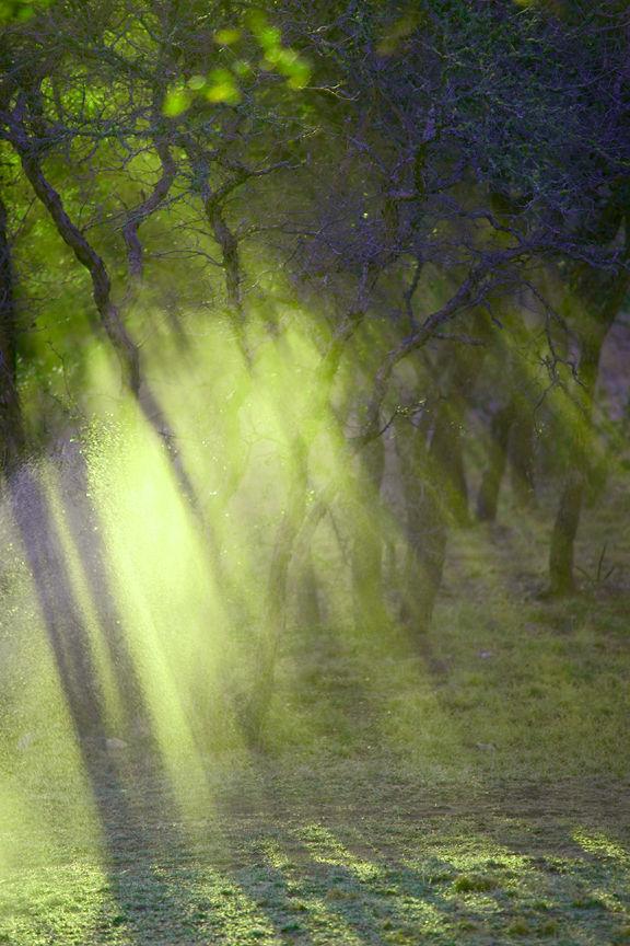 misty sun rays