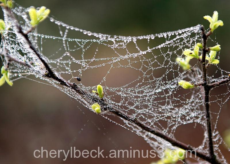 spider web in the rain